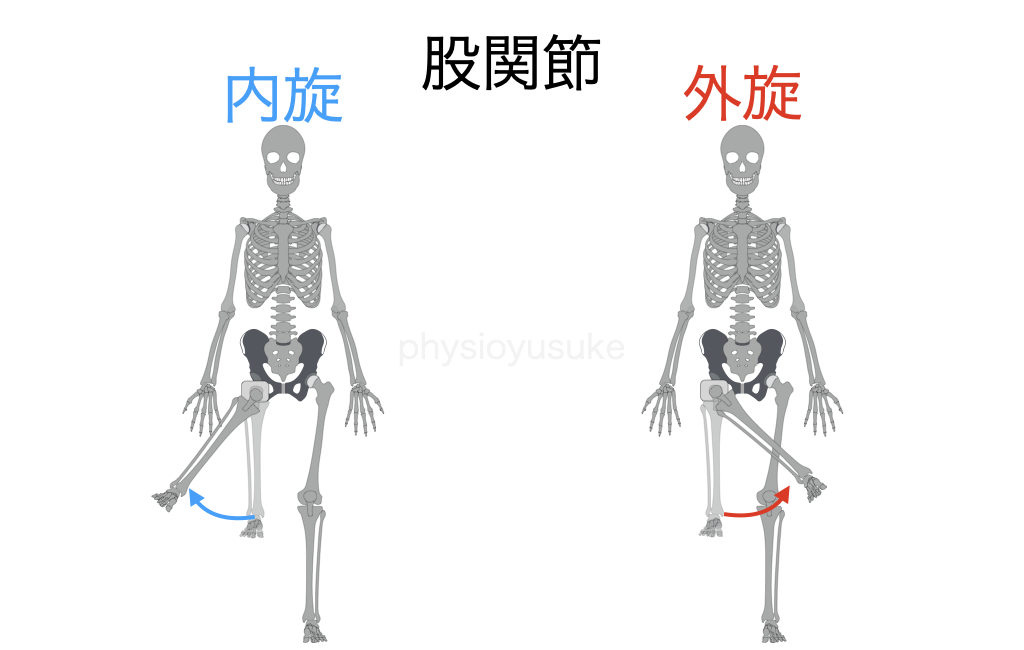 腰痛体操、股関節、運動、内旋、外旋