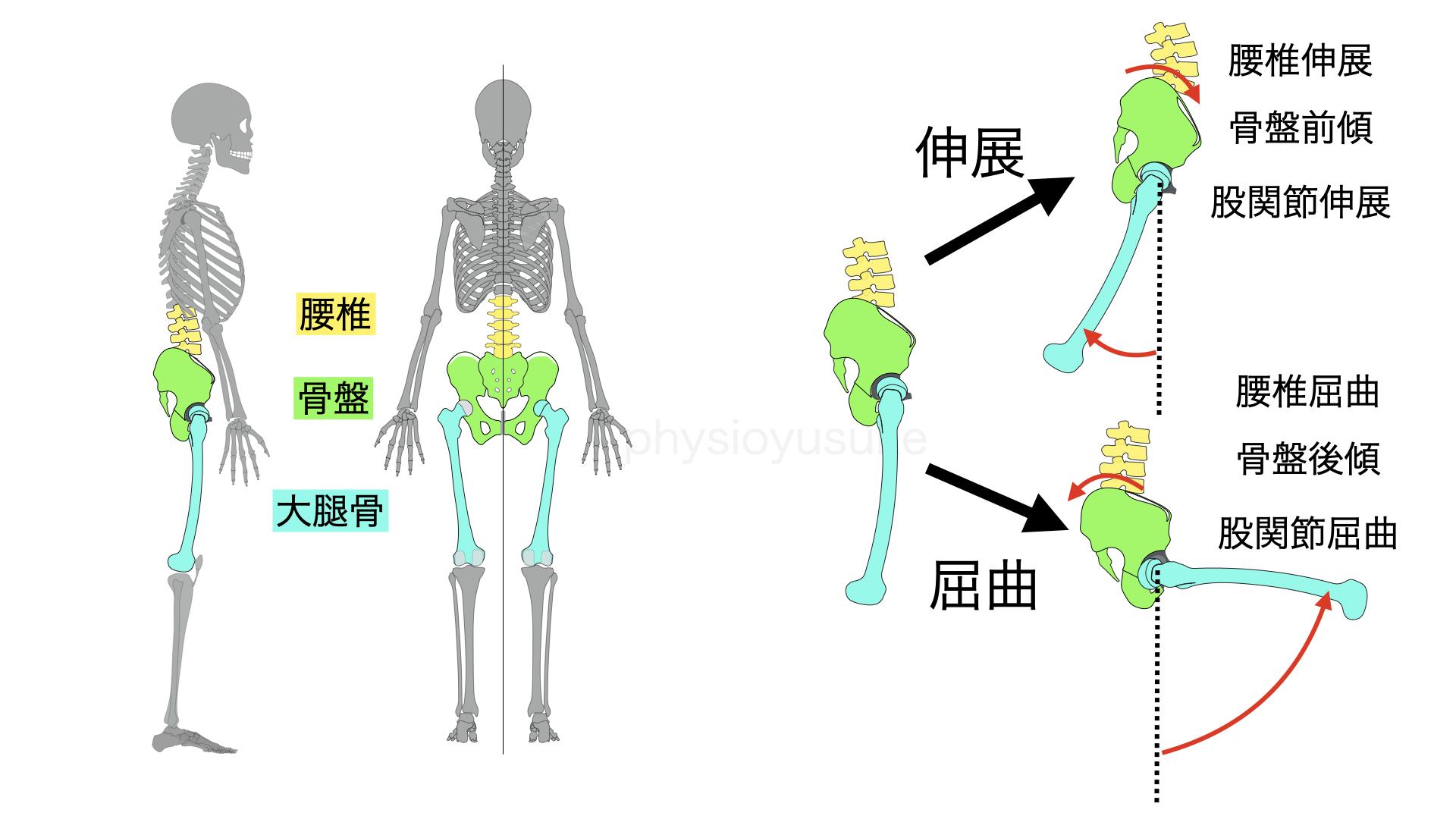 腰痛体操、股関節、運動、腰椎、骨盤大腿リズム
