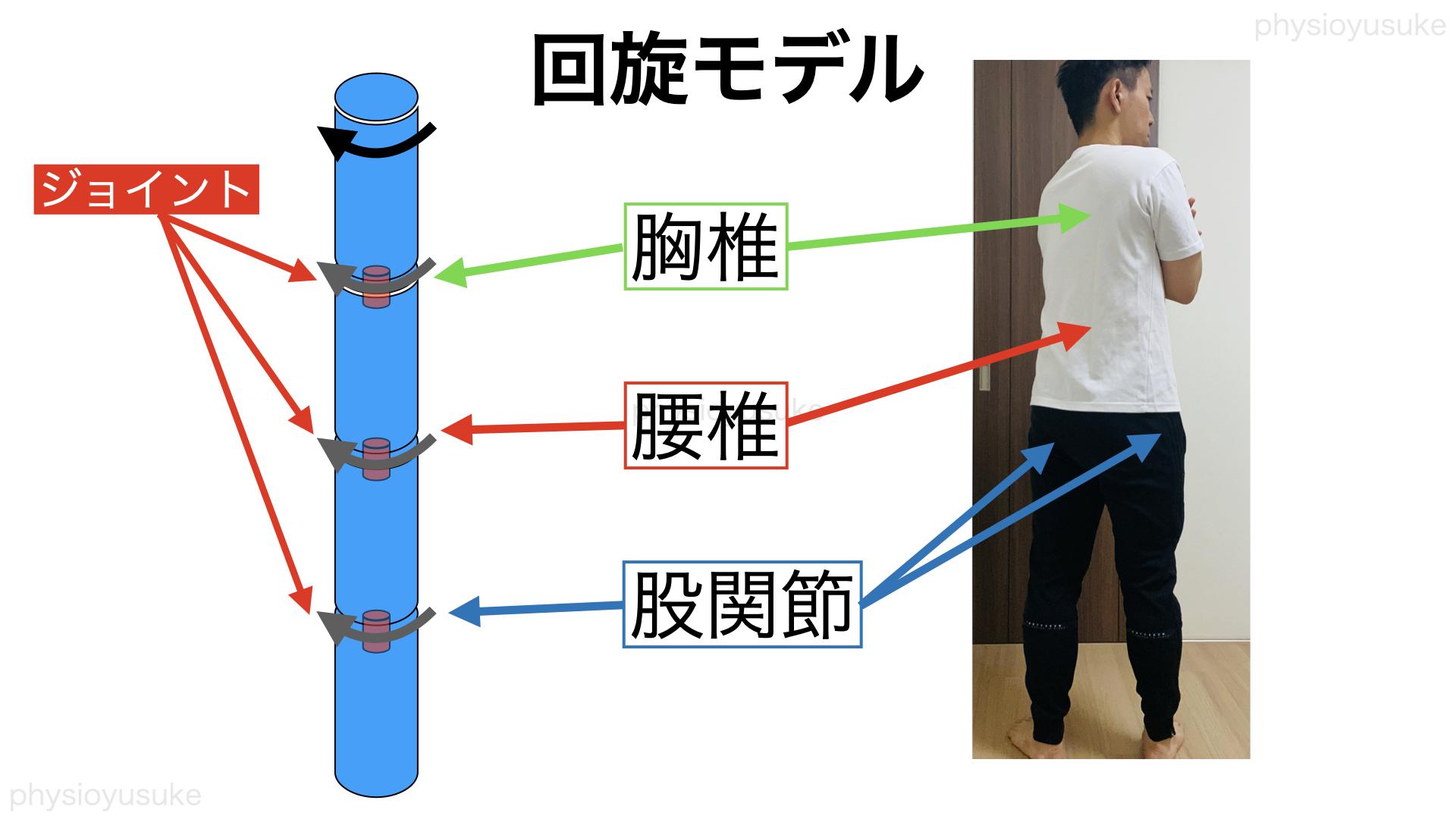 回旋型腰痛、モデル