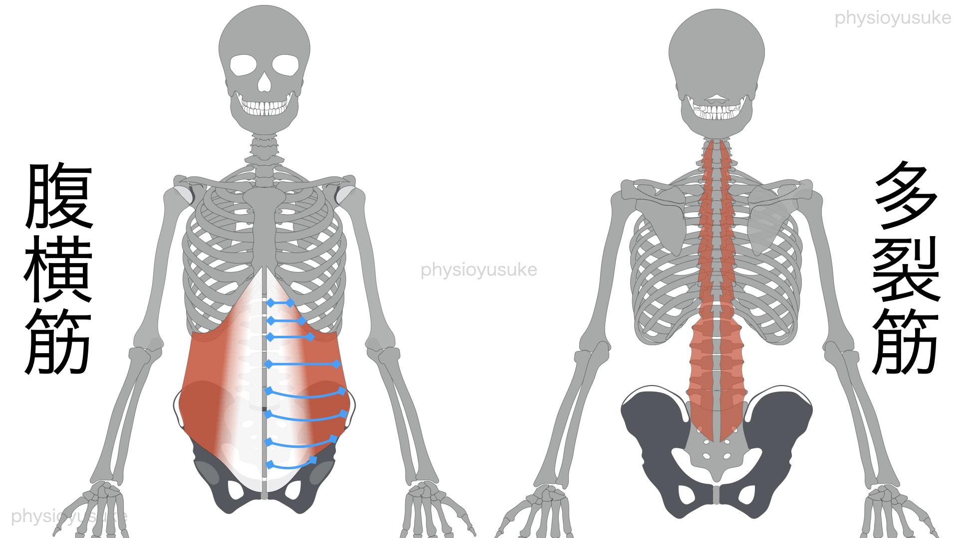 腹圧、腹横筋、多裂筋