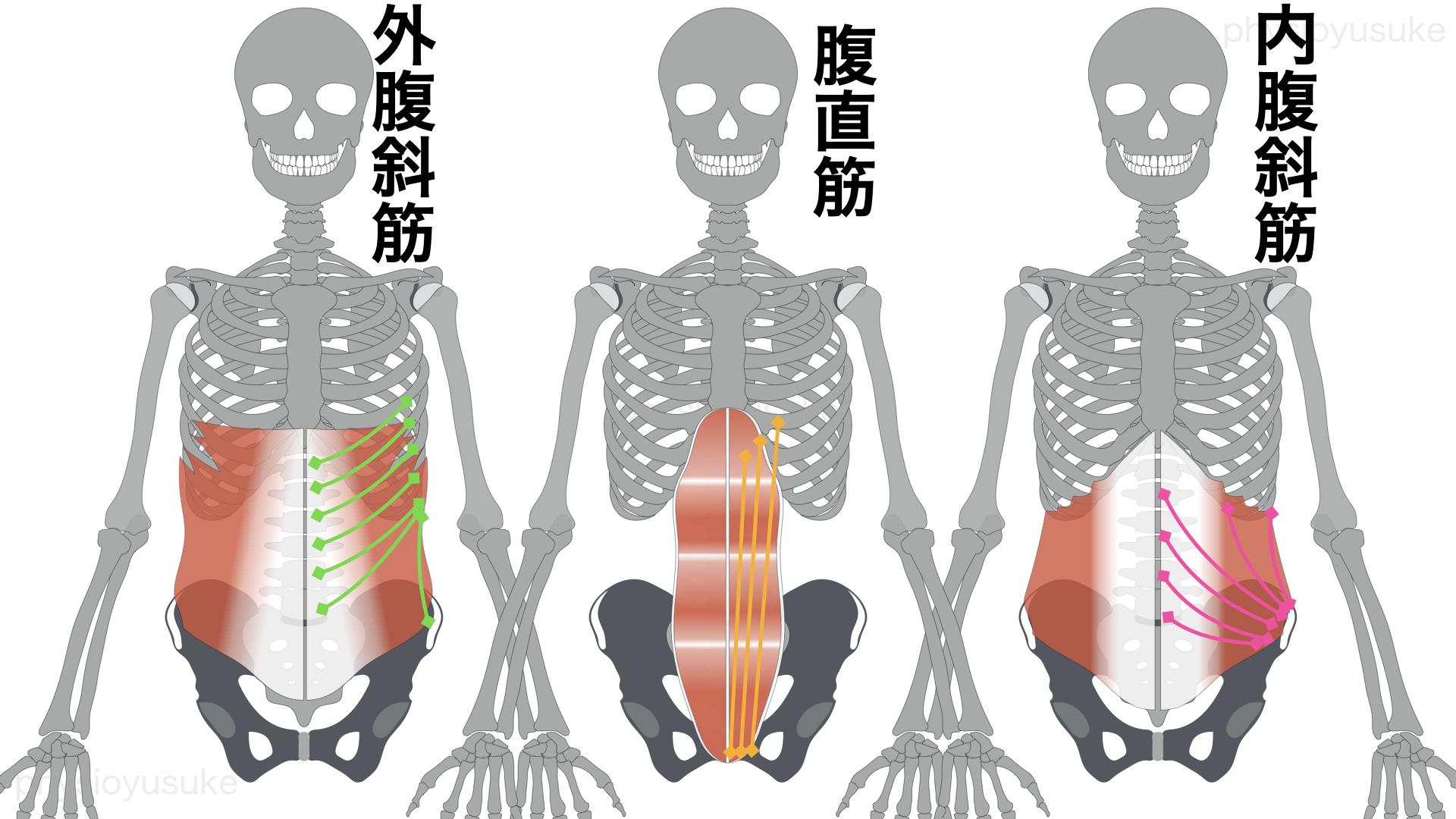 腹圧、内腹斜筋、外腹斜筋、腹直筋