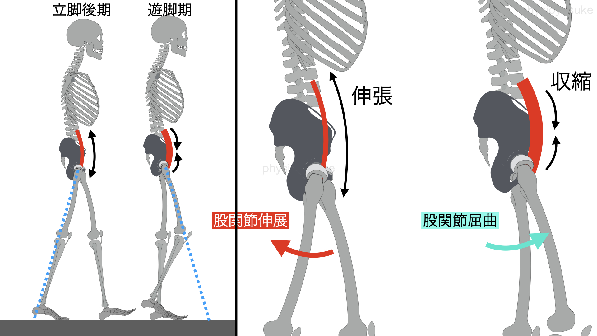 歩行、腸腰筋