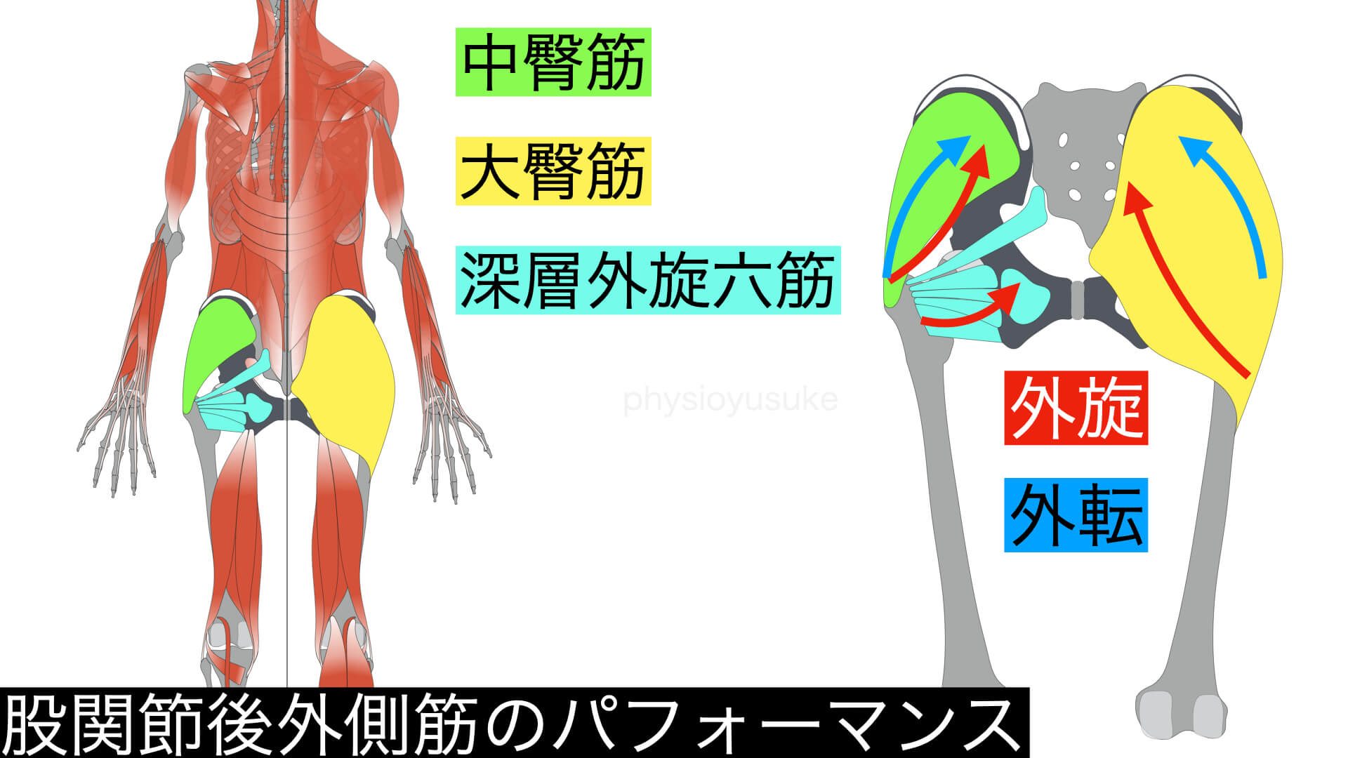 股関節外転外旋筋群