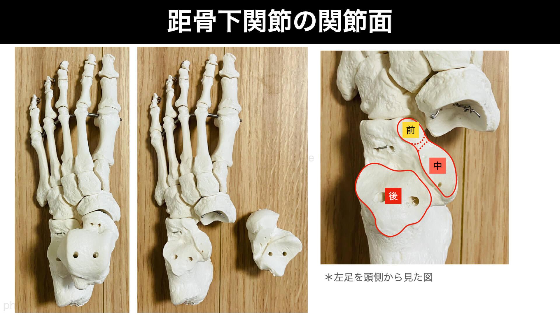 距骨下関節の関節面